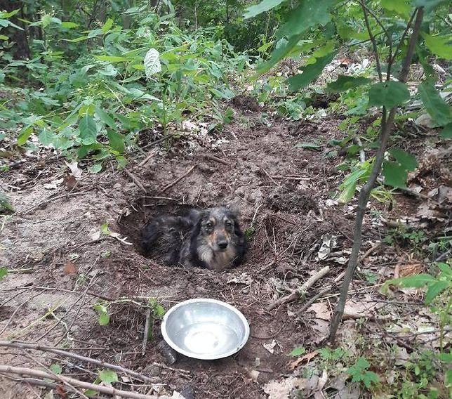 Huta Komorowska. Makabryczne odkrycie, pies zakopany żywcem