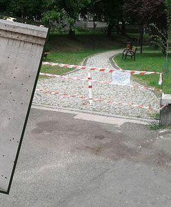 Inwazja owadów w Katowicach. Plac zabaw zamknięty. To plaga