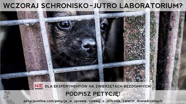 5 listopada protest przeciw ustawie zezwalającej na eksperymenty na bezdomnych zwierzętach