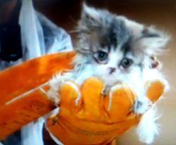 W Piasecznie uratowano 50 kotów perskich. Tożsamość właściciela zaskakuje