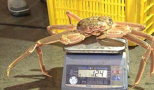 Rekordowa cena za kraba