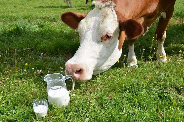 Mleko UHT