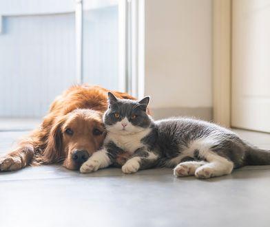 Koty i psy pomocne w obniżaniu poziomu kortyzolu.