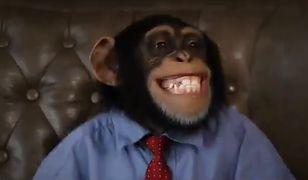 PiS w najnowszym klipie naśmiewa się z programu wyborczego Koalicji Obywatelskiej