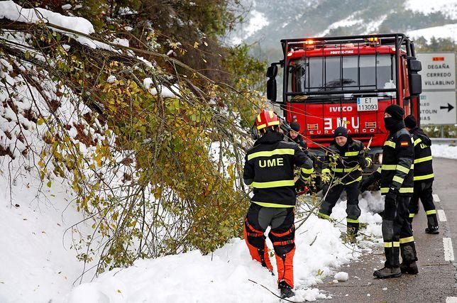 Straż pożarna usuwa z dróg zwalone drzewa.