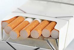 Minister rolnictwa: Walkę o tytoń ostatecznie przegramy. Trzeba się przebranżowić