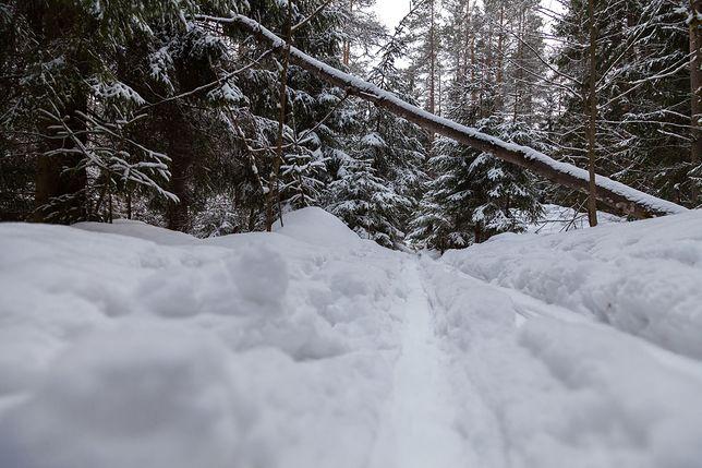 Spacer po lesie był dla leśniczego zaskakujący (zdjęcie ilustracyjne)