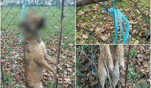 Martwy pies znaleziony w Jarosławiu.