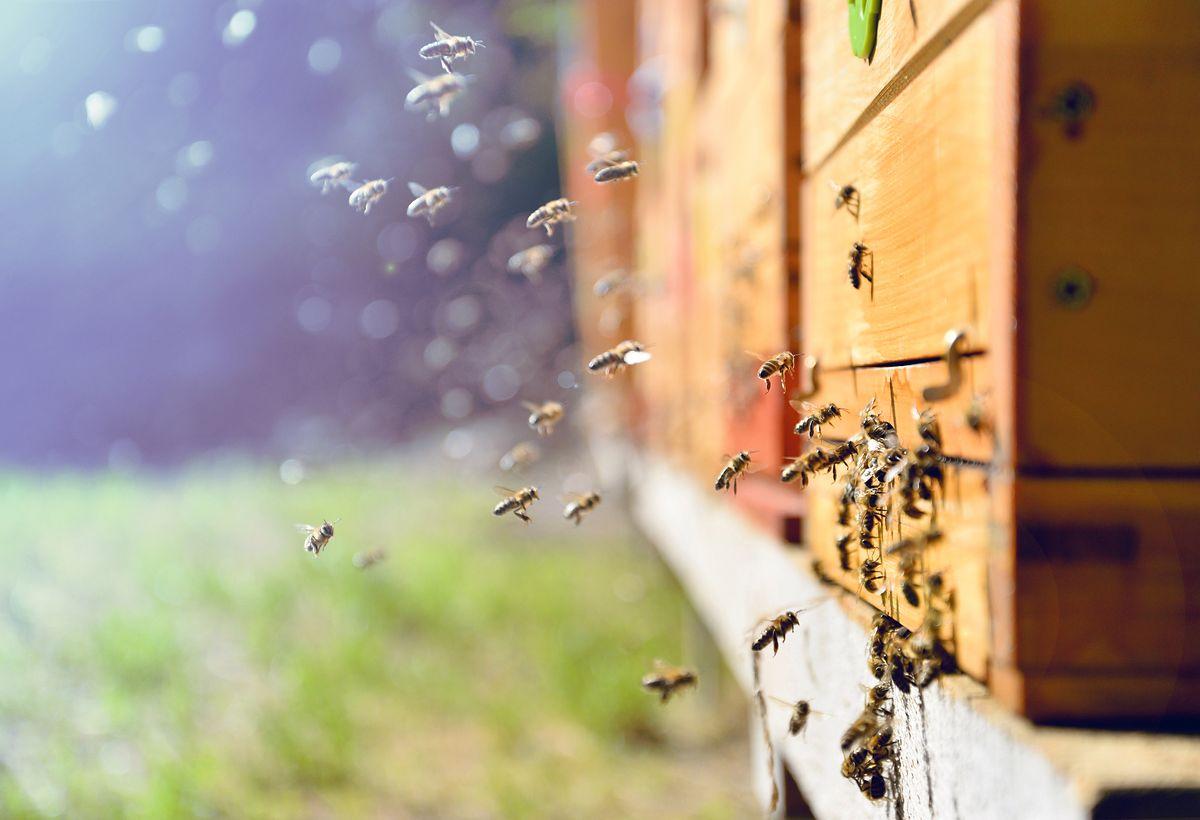 PE w obronie pszczół. Zapylanie warte jest 15 mld euro rocznie