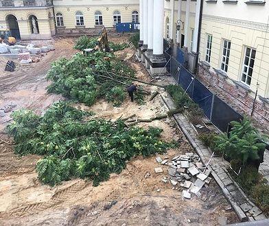 Wojewoda mazowiecki podjął decyzję o wycięciu szpaleru drzew przy pl. Bankowym we wrześniu 2017 roku