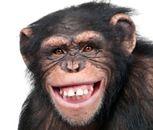 Każdy szympans ma coś z maklera i hazardzisty