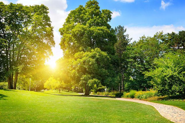 Pogoda na niedzielę - 2 września. Idealny dzień na spacer. Będzie ciepło i słonecznie