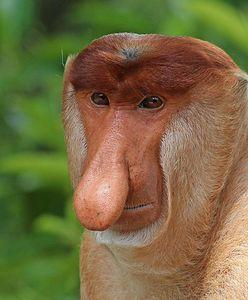 Memy pomagają ratować zagrożone gatunki. Zaskakujące wyniki badań