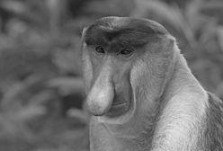 Oto co tak naprawdę kryje się pod maską małpy, z której śmieje się pół Polski
