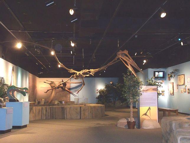 Szkielet innego pterozaura - zdjęcie poglądowe