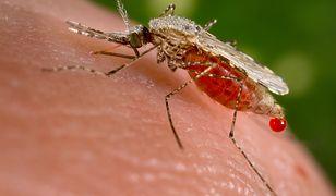 Komary przenoszą nowe odporne szczepy malarii - liczba zachorowań znacznie wzrosła