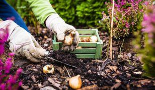 Jesienne prace ogrodowe wymagają sporego zaangażowania