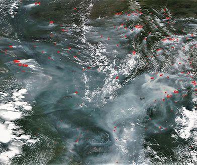 Satelitarne zdjęcie pożarów na Syberii. Szare - to dym. Czerwone - punkty pożarów