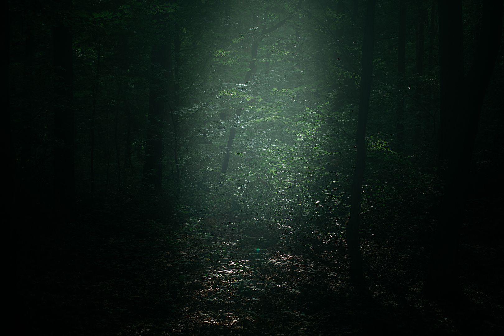 Tajemniczy las łączy dwie wsie: Gniewczynę i Jagiełłę (woj. podkarpackie)