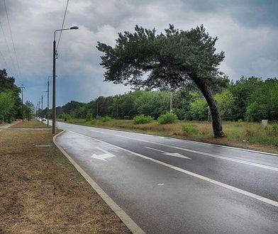 """""""Nie ma żadnego powodu, aby wycinać to drzewo"""". Gronkiewicz-Waltz zabrała głos ws. falenickiej sosny"""