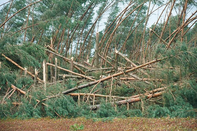 Zniszczony przez nawałnicę las w miejscowości Rytel