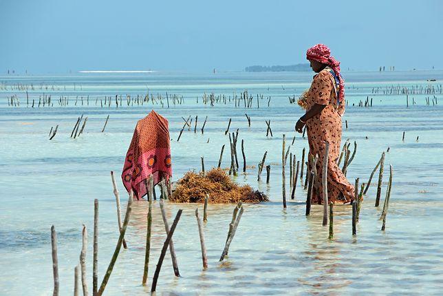 Zanzibar to znacznie więcej niż tylko wakacje pod palmami