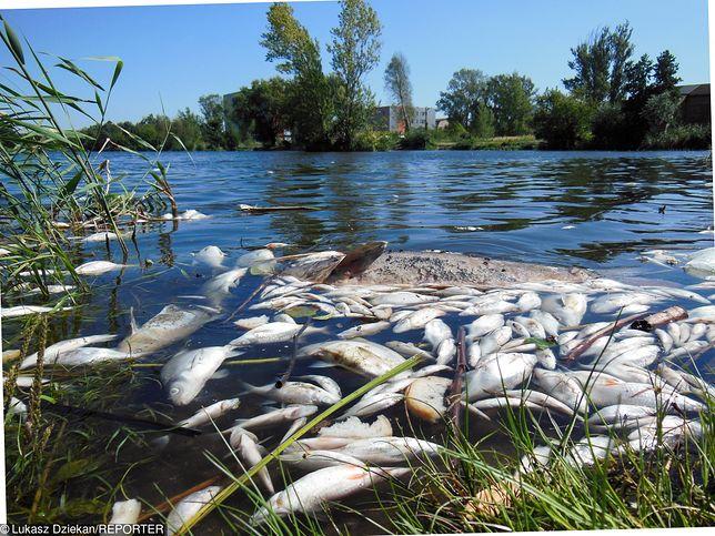 Masowe wymieranie ryb na Warmii i Mazurach. Przez upały w jeziorach brakuje tlenu