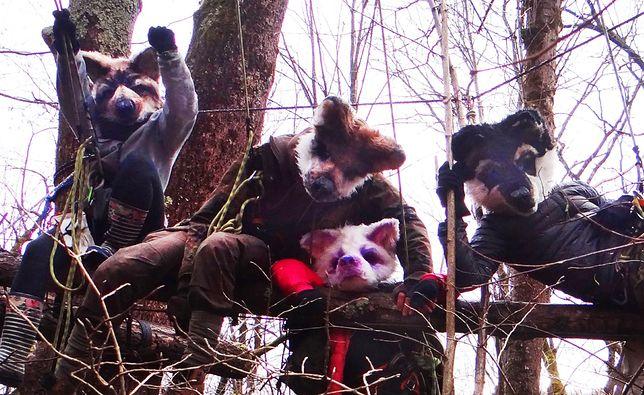 Wilczyce blokują wycinkę drzew w Puszczy Karpackiej (Źródło: Wilczyce)