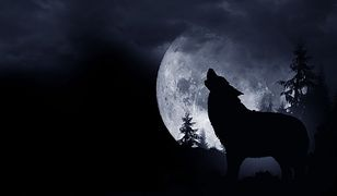 Warszawa wspiera ochronę wilków
