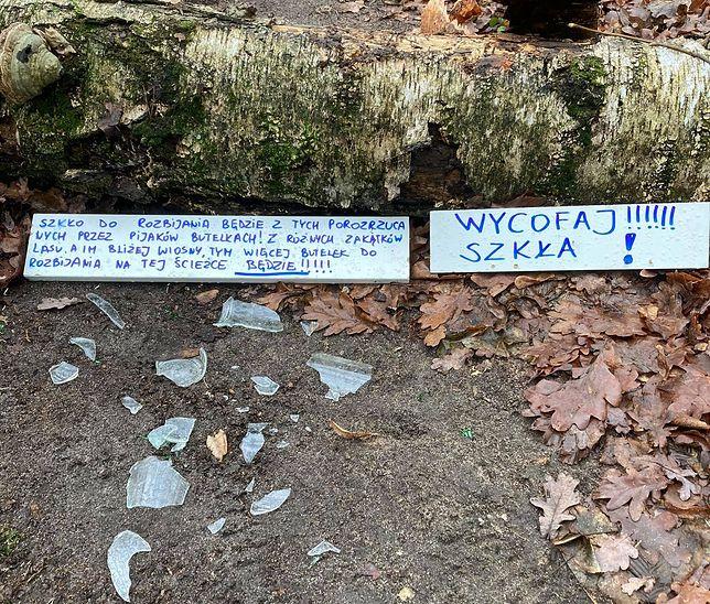 W okolicy Podkowy Leśnej ktoś rozsypuje szkło w lesie