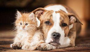 Psy rozumieją, co do nich mówimy. Koty też, ale mają to w nosie