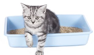 kot wychodzi z kuwety