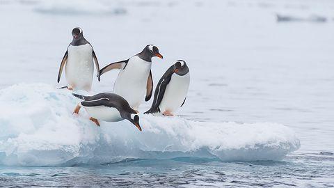 Linux 5.4 oficjalnie z exFAT. Do tego wielkie łatanie inteli i nowość od Google'a