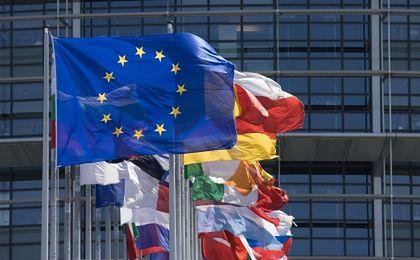 Eurogruszki na wierzbie