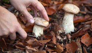 Czy grzyby rzeczywiście są ciężkostrawne? Dietetyk wyjaśnia