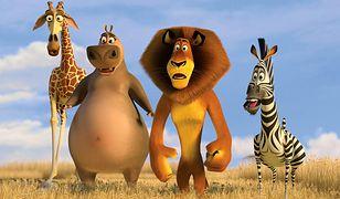"""Program TV na sobotę – """"Madagaskar"""", """"Pożyczony narzeczony"""", """"Strażnik"""" [04-05-2019]"""