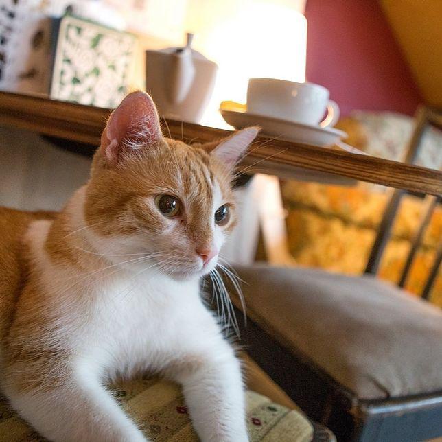 Warszawa. Właściciele Miau Cafe walczą o przetrwanie w czasie pandemii koronawirusa