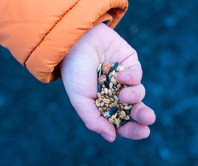 Warszawa. Ptaki potrzebują karmy, koty schronienia. Jak dbać o zwierzęta zimą?