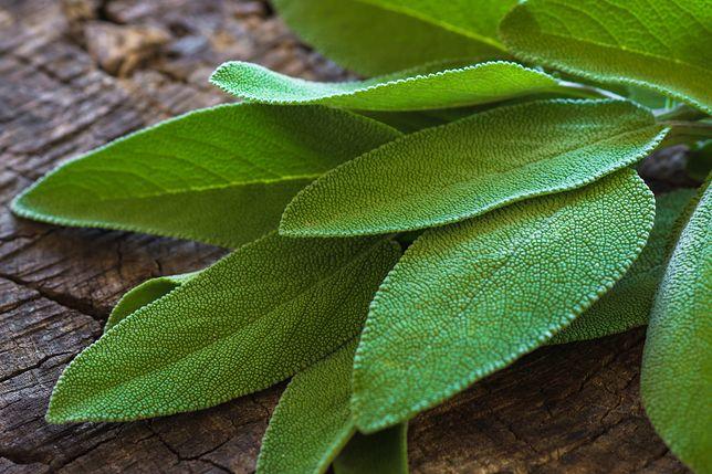 Szałwia - opis, właściwości i zastosowanie zioła