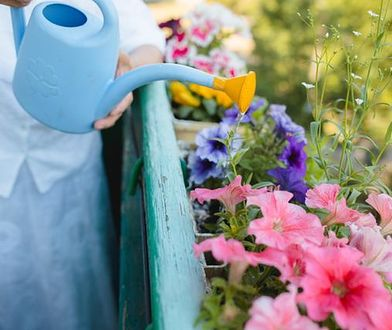 Aby rośliny rosły zdrowo, należy dbać o nie w konkretny sposób