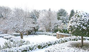 Rok w ogrodzie – najważniejsze prace od stycznia do grudnia