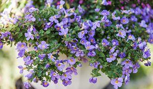 Balkon w kolorach natury. Jakie kwiaty wybrać?
