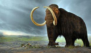 Rosja buduje laboratorium, który między innymi zajmie się klonowaniem mamutów