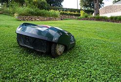 Wiosenna pielęgnacja trawnika. Rzeczy, o które musisz zadbać
