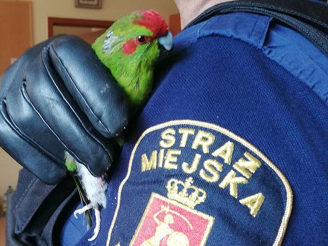 Warszawa. Papuga wleciała do jednego z mieszkań na Mokotowie