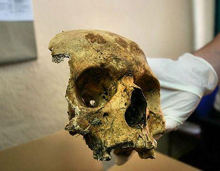 Makabryczne znalezisko w Płaszowie. Pies wykopał ludzką czaszkę
