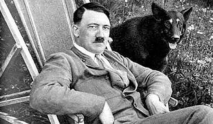 """Eksperyment """"Wooffan SS"""", czyli jak naziści uczyli psy... mówić"""