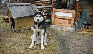 Pies będzie miał dłuższy łańcuch, 5-metrowy.