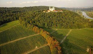 Polskie szlaki wina