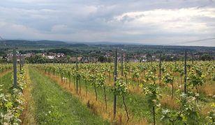 Szlakiem wina po Małopolsce
